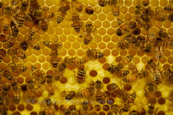 Picture of Bees warriors