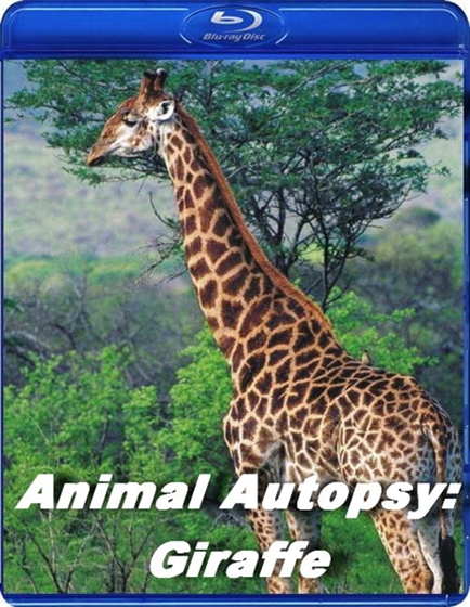 Picture of Animal Autopsy Giraffe