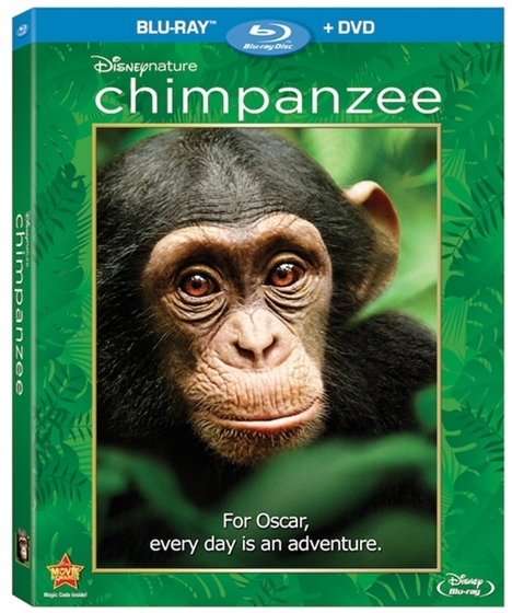 Picture of Chimpanzee (2012)