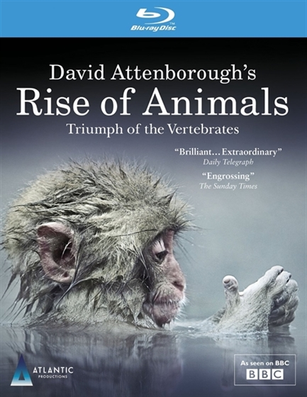 Picture of BBC Rise of Animals Triumph of the Vertebrates [Bluray]