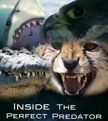 Picture of BBC - Inside the Perfect Predator [Bluray]