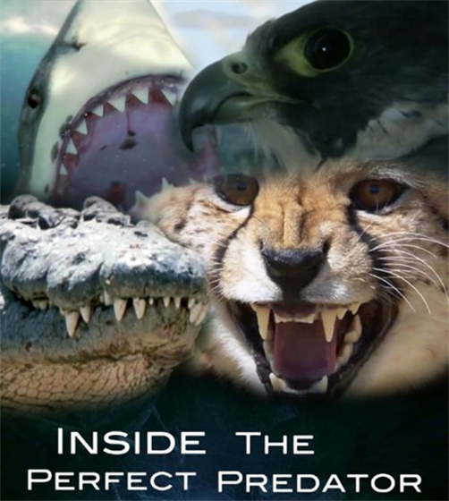 Picture of BBC - Inside the Perfect Predator [Bluray]