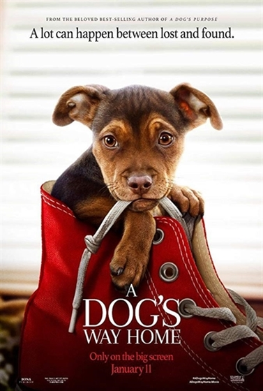 Picture of A Dog's Way Home [2019]