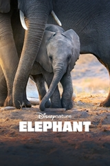 Picture of Elephant [2020] 4K Ultra HD
